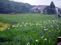 原生沼・写真