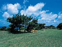 魚津ヶ崎公園キャンプ場・写真