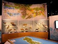 対馬野生生物保護センター・写真