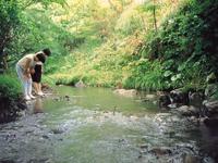 ヒゴタイ公園キャンプ村・写真