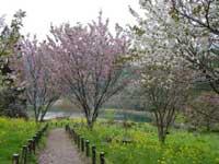 桜図鑑園・写真