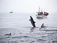 イルカウオッチング・写真