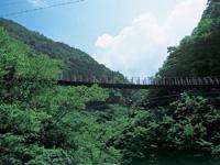 樅木吊橋・写真