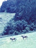 乗馬クラブクレイン湯布院・写真