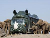 九州自然動物公園アフリカンサファリ・写真