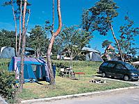 大分農業文化公園オートキャンプ場・写真