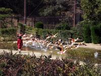 宮崎市フェニックス自然動物園・写真