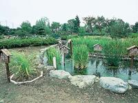 万葉植物園・写真