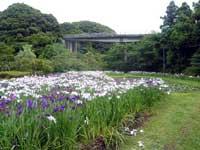 玉泉寺児童公園・写真