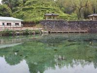 丸池湧水・写真