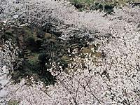 市来観音ヶ池「市民の森」・写真