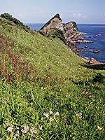 鳥ノ巣山展望台のカノコユリ・写真