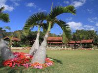 宮古島市熱帯植物園・写真