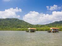 亜熱帯植物楽園 由布島