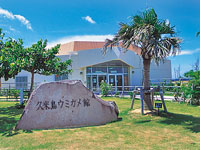 久米島ウミガメ館・写真