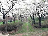 大森公園・写真