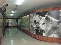 秋田犬会館・写真