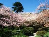 日本国花苑・写真