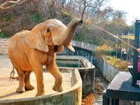 秋田市大森山動物園ミルヴェ・写真