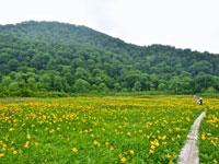 田苗代湿原・写真