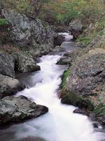 世界遺産白神山地二ッ森コース・写真