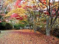 きみまち阪公園・写真