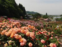 東沢バラ公園・写真