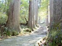 羽黒山参道杉並木・写真