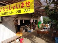 山形チェリーランド(上山観光フルーツ園)・写真