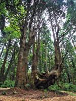 幻想の森・写真