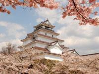 鶴ヶ城公園の桜・写真