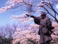 佐白山麓公園の桜・写真