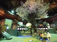 茨城県きのこ博士館・写真