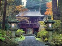 御岩神社 三本杉・写真