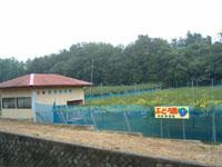 岡野果樹園・写真
