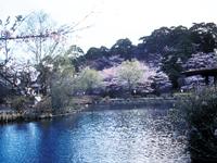 烏ヶ森公園・写真