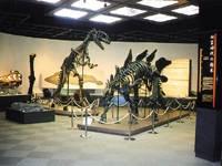 栃木県立博物館・写真