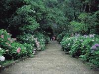 太平山神社・写真