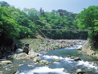 七ツ岩吊橋・写真