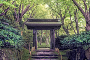 Enjoy a Half Day Tour Including Ropeway and Shrine in Atami