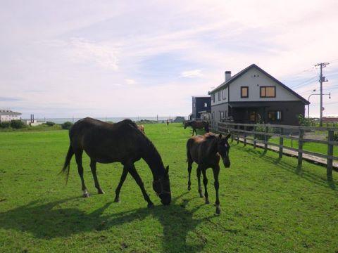 Horse Village Uma no Yado