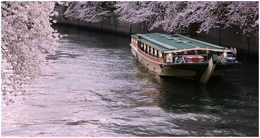 Enjoy a leisurely blossom viewing experience from atop a cruise deck(Tokyo around)