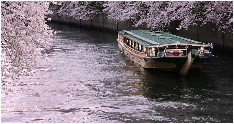 벚꽃을 배 위에서 여유롭게 감상하는 꽃구경 크루즈(도쿄 각지)