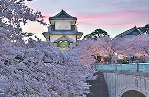 Kanazawa Sakura