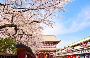 Tokyo Sakura