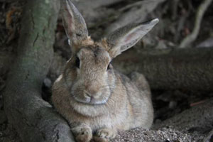 See the Rabbit Island and taste sake near Hiroshima!