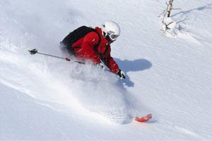 搭乘北海道最熱門的滑雪巴士來新雪谷一遊