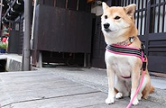 Japan's Cutest Hotel Dogs