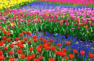 숨이 멎을듯한 꽃들: 6가지 멋진 봄