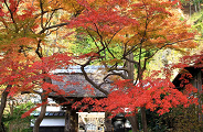 Kamakura in Autumn
